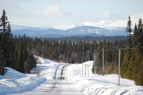 A Swedish road in winter